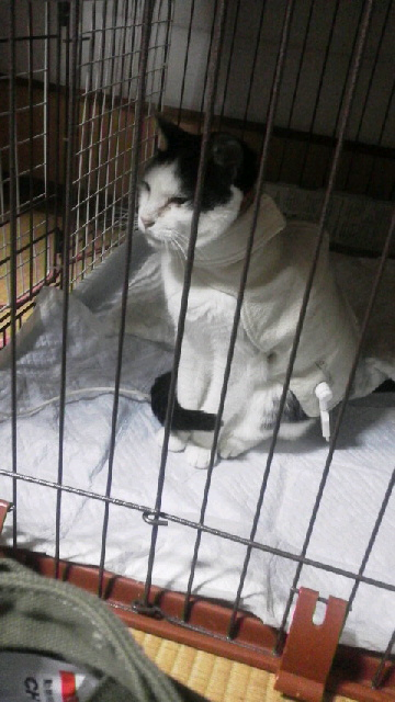 肺腫瘍?の猫さんが=^<br />  ・ω・^=
